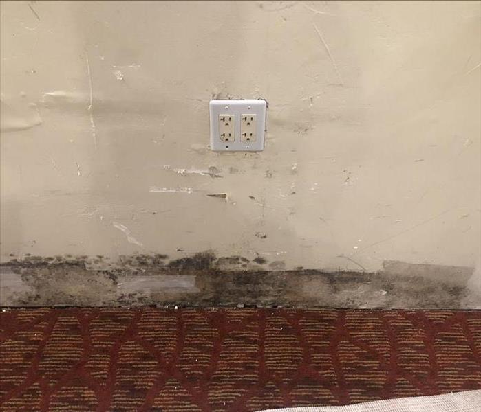 Mold on resident wall