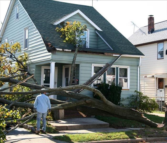 tree falling on a home